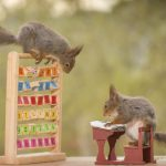 red squirrels in school class outside