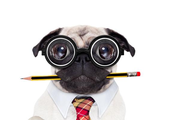 hund versicherung